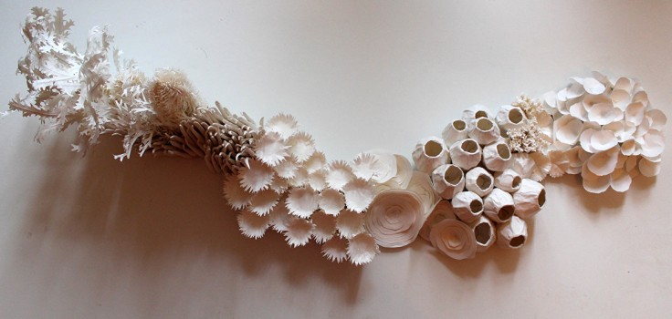 Coral Colony © Julie K. Dodd