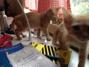 Kittens in the middle of things