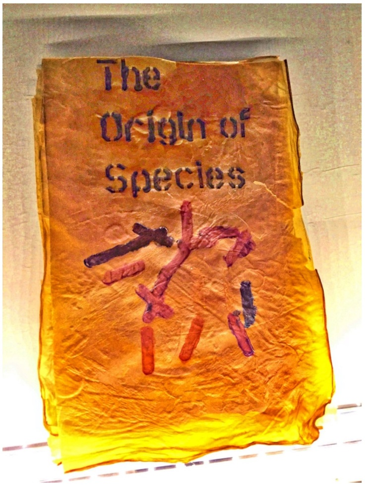 """Artist: Dr. Simon F Park The Origin of Species """"The small book shown here was grown from and made entirely from bacteria. Not only is the fabric of its pages (GXCELL) produced by bacteria, but the book is also printed and illustrated with naturally pigmented bacteria. """" Posted 27 March 2016 Photo credit: Dr. Simon F. Park"""