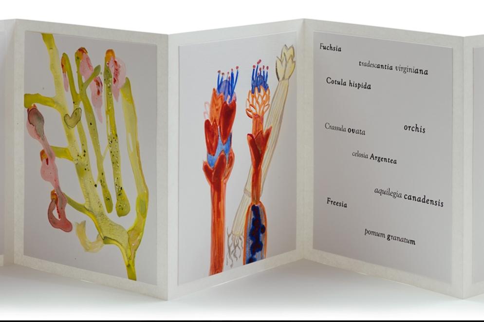 Vesna Kittelson, Mrs. Darwin's Garden, Book Two, 2014 Accordion book, 9 x 7 in